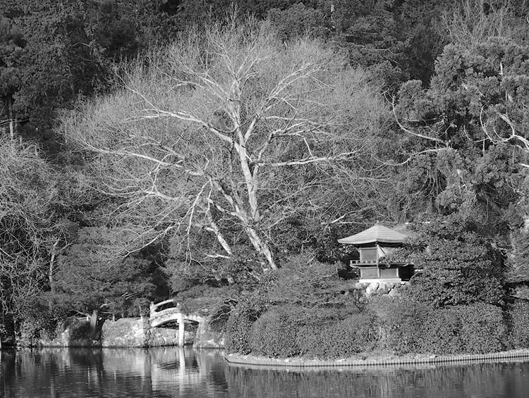 photoblog image Spiritual tree? - Ryoanji, Kyoto