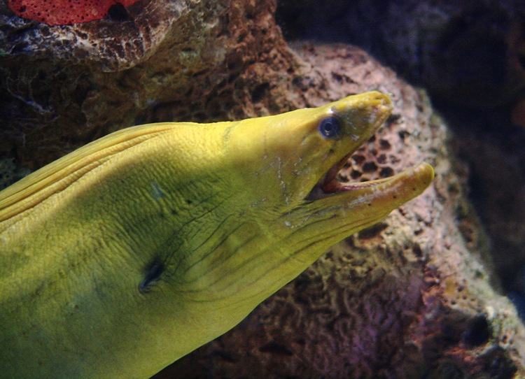 photoblog image Green Moray
